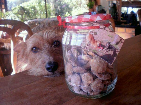 Kontakt Evi - Hunde Leckerlies