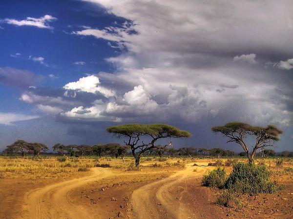 Über Evi - Im afrikanischen Busch