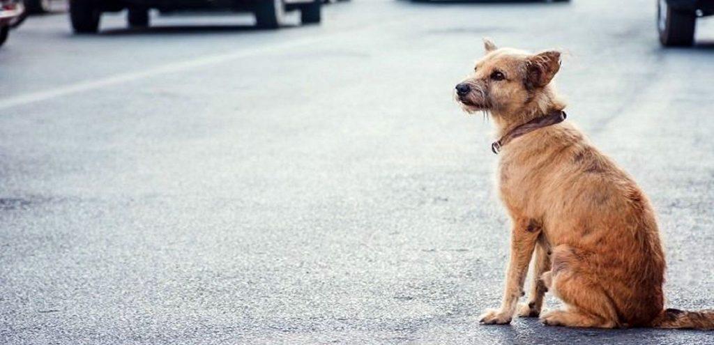 Wie man einen verlorenen Hund findet
